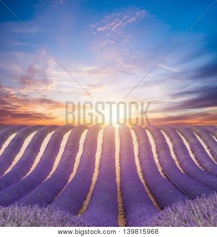 Beautiful landscape of blooming lavender field in sunset. Provence, France, Europe.