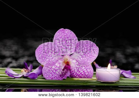 Thin bamboo grove with orchid ,candle on wet background
