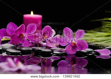 Palm with orchid ,candle on wet background