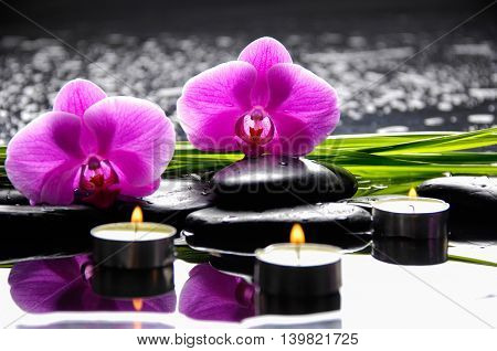 Green leaf with orchid ,candle on wet background