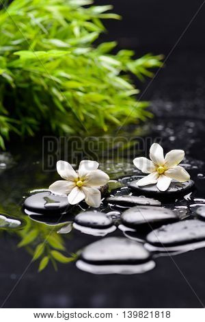 two gardenia with therapy stones