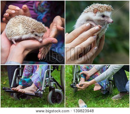 set. young girl in a wheelchair holding a hedgehog