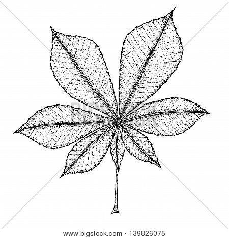 chestnut leaf on a white background. Vector illustration