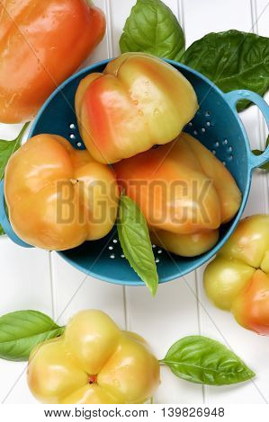 Arrangement of Fresh Ripe Yellow and Orange Bell Peppers with Green Basil Leafs in Blue Colander closeup on White Plank background. Top View