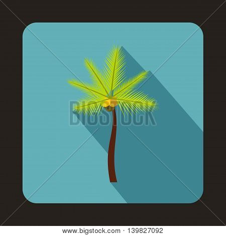 Coconut palm tree icon in flat style on a baby blue background