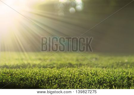 Green grass meadow lit by bright summer sun background with beautiful bokeh effect.