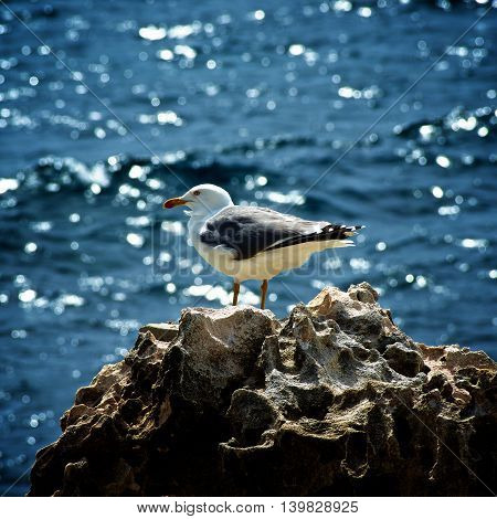Beauty Lonely Seagull on Edge of Crag on Blurred and Wavy Sea background Outdoors