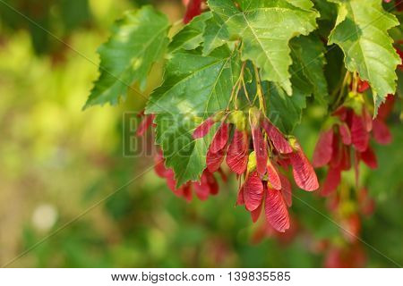 autumn leaves beautiful american nature outdoor plant