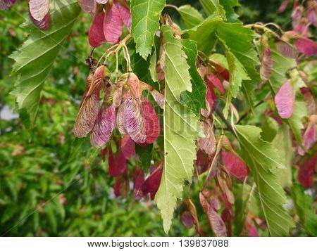 Detail Of A Tree Wit Red And Green Leaves