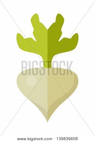 Radishes vector in flat style design. Vegetable illustration for conceptual banners, icons, app pictogram, infographic, and logotype elements. Isolated on white background.