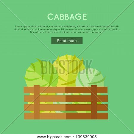 Cabbage vector web banner. Flat design. Illustration of wooden box full of fresh and ripe vegetables on color background for grocery shop, farm, agricultural company web page design.
