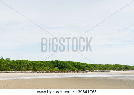 Mangrove forest in sea shore aerial roots at Phetchaburi the Gulf of Thailand