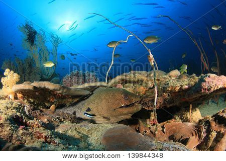 Coral reef and Giant Moray Eel