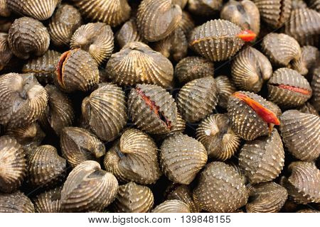 fresh blood cockles for sale at a market