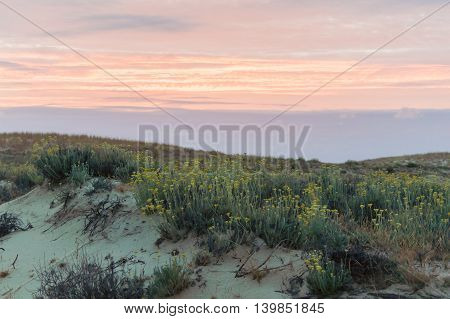 Dune covered withe vegetation at the sunset.