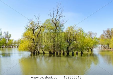 Danube delta tranquil scenery