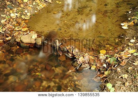 A small stream of crystal clear water with leaves