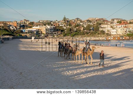 July 24, 2016: Bondi Beach, Sydney Australia - Tourists Riding Camels On The Beach As Part Of The Bo