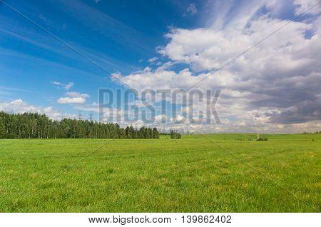 Grass Land Vibrant Nature