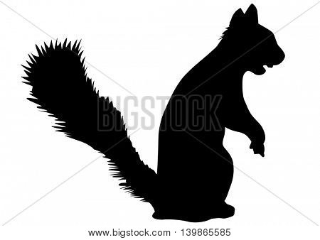 Fluffy squirrel on white background