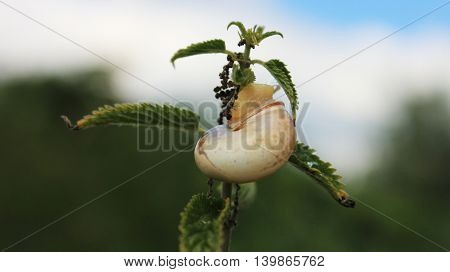 Snail with green leaves on the branch close up