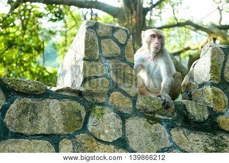 Portrait Of Monkey Is Sitting On The Rock