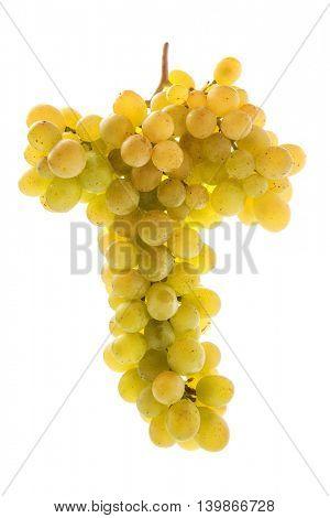 White grape isolated on white background