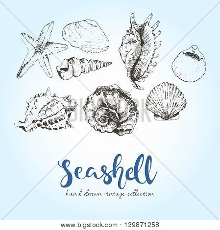 Vector set of engraved seashells. Hand drawn wintage style summer illustration. Underwater beach exotic animals.