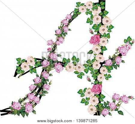 illustration with letter A from rose and brier flowers isolated on white background