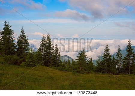 Mountain meadow above the clouds in Carpathian mountains. Cloudy morning in the spruce forest.