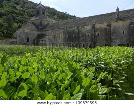 View of Senanque Abbey with closeup plants on the front