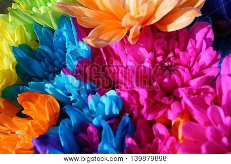 Close-up of beautiful multicolored flowers in a vase
