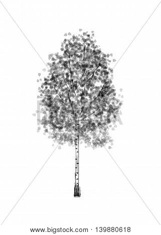 Birch. Drawing tree on white bacground. Black silhouette wood.
