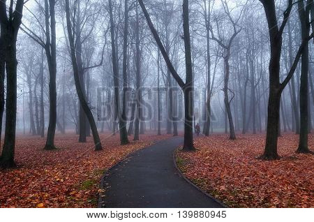 Autumn park alley in dense fog - foggy mysterious landscape in cold tones with bare trees and red fallen leaves