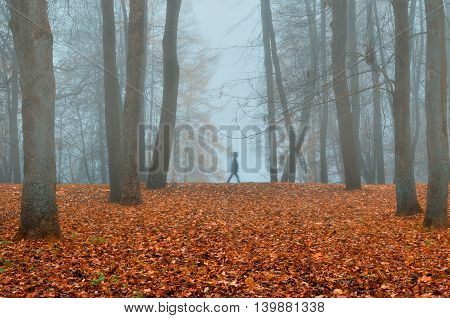 Autumn natural autumn park in dense fog with ghostly silhouette- autumn landscape with autumn trees and red dry fallen leaves. Autumn park in dense autumn fog. Soft focus applied.