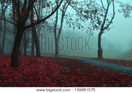 Autumn misty view of autumn park alley in dense fog - foggy autumn dusky landscape with bare autumn trees and red fallen leaves. Autumn alley in dense autumn fog. Soft filter applied.