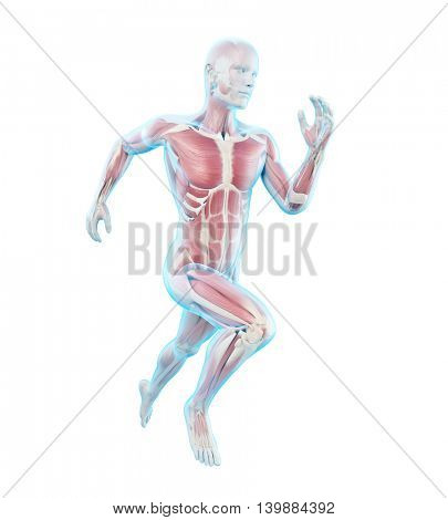 3d rendered medically accurate illustration of a runner�´s muscles