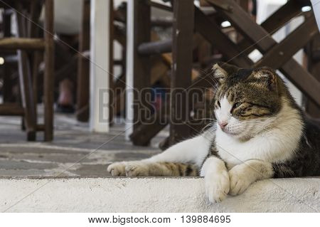 Beautiful cat staring at something while lying in the shadows