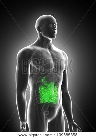3d rendered medically accurate illustration of the small intestine