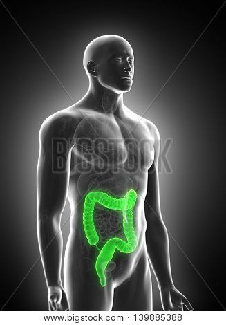 3d rendered medically accurate illustration of the colon