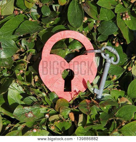 heart symbol in the form of a padlock and key on rare foliage background top view / key to heart