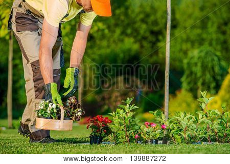 Caucasian Gardener Preparing and Planting Flowers During Sunny Spring Day. Garden Works.