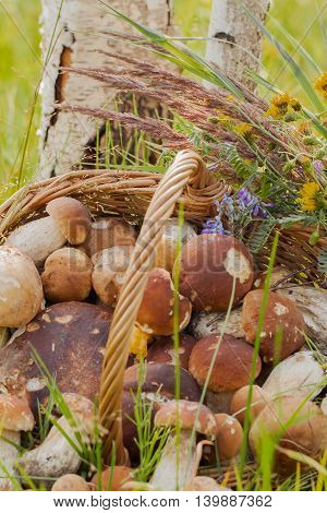 Porcini mushrooms in wicker basket in the Forest close up