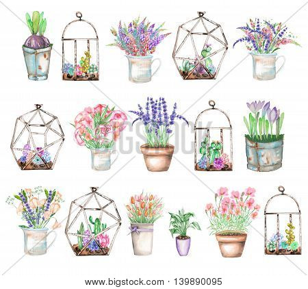 A set of illustrations with bouquets of  wildflowers in a rustic jar and pots and florariums with succulents and cactuses, isolated hand drawn in a watercolor on a white background