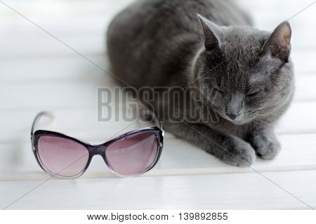 The cat is resting on a sun lounger beside with sunglasses / places for rest