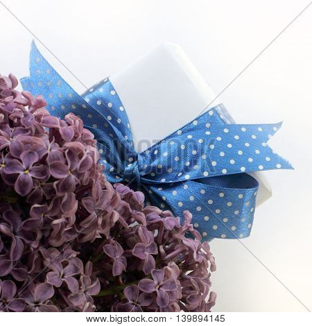 gift festive tied with a blue ribbon with white polka dots on a background of lilac flowers / congratulation with flowers