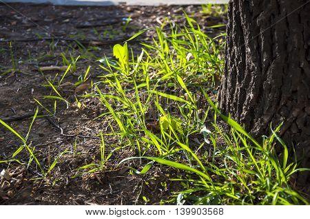 Grass Blades On The Ground