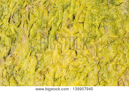Green Algae Sludge