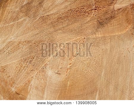texture of wood cross-section of the barrel