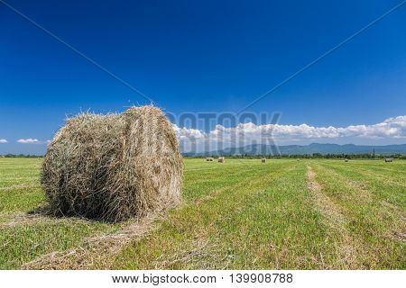 Close view of the roll of hay in the green field